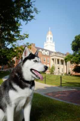 Canine Jonathan XIV in front of Wilbur Cross Building